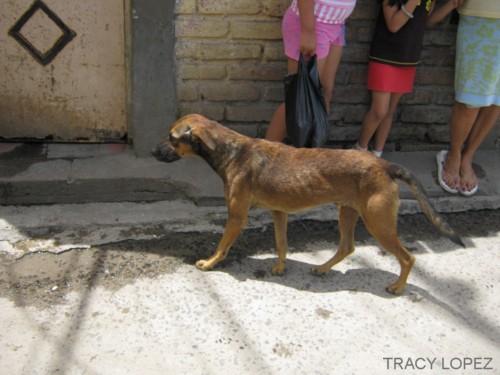 El Salvador Perros Aguacateros Latinaish