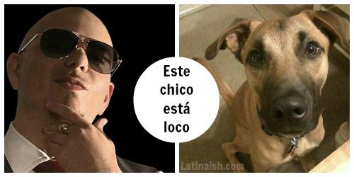 chicoestaloco2