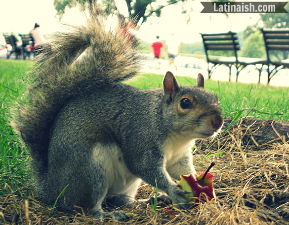 Señor Ardilla accepted a piece of apple core in return for sharing the shade beneath his tree.