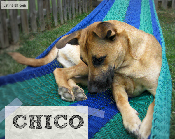 chico2013