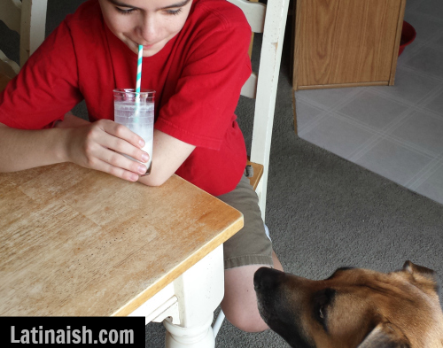 (Even our dog Chico wants a sip.)