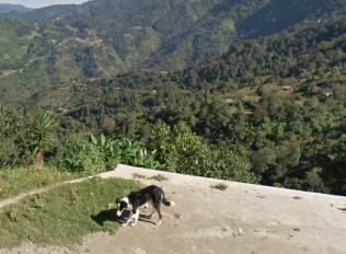 perro3-tectitan-guatemala