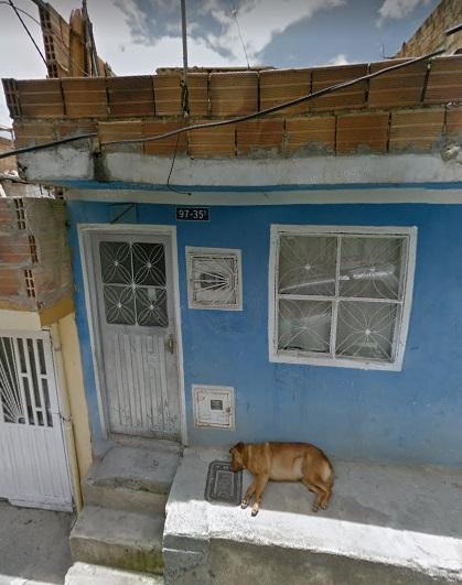 streetview-dog-bogota-8
